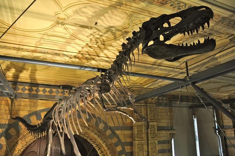 Museu de História Natural em Londres