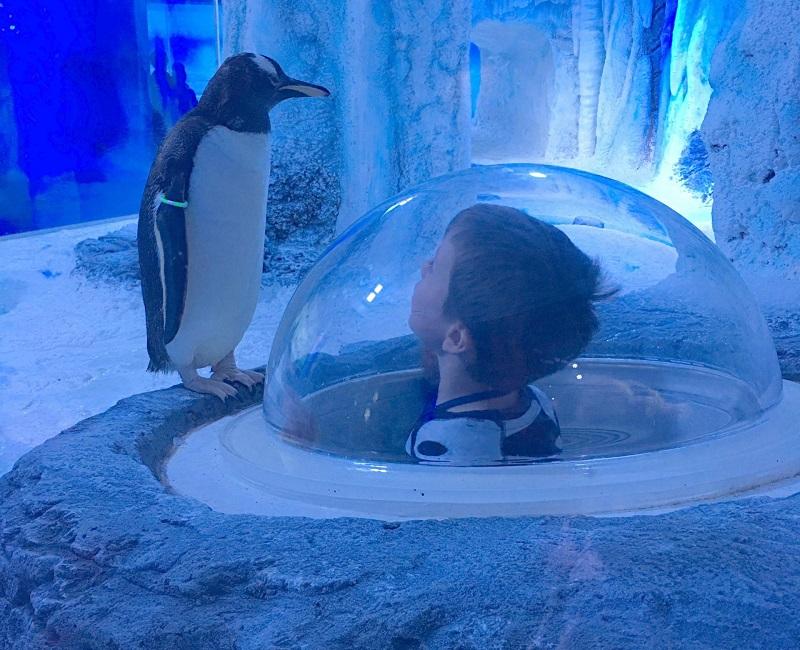 Área de pinguins no Aquário Sea Life em Londres