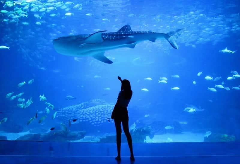 Aquário com tubarões em Londres